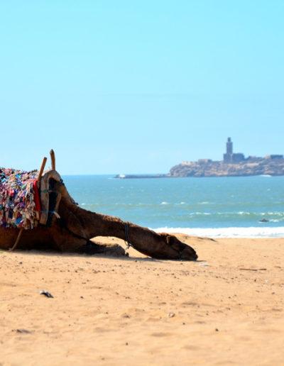 pelo-Marrocos14